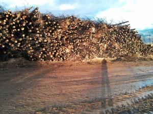 El proyecto de la nueva Ley de Montes penalizará el comercio ilegal de la madera.