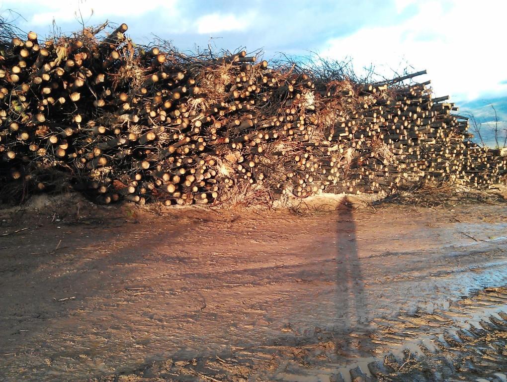El proyecto de la nueva Ley de Montes penalizará el comercio ilegal de madera.